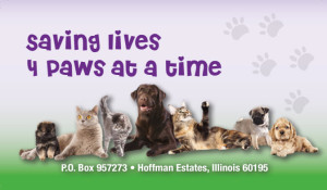 Saving Lives 4 Paws at a Time