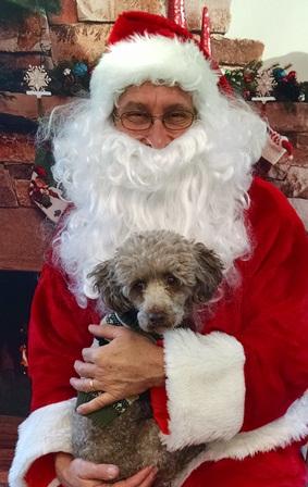 Poodle Christmas 2