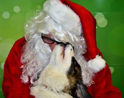 Santa Pictures 3