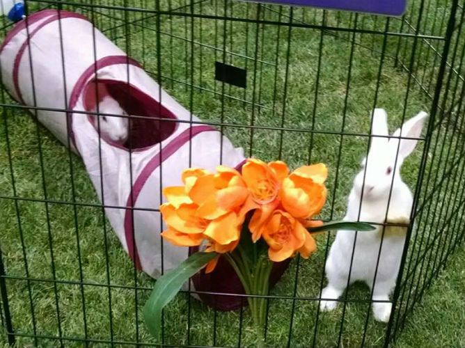 Expo Rabbits R