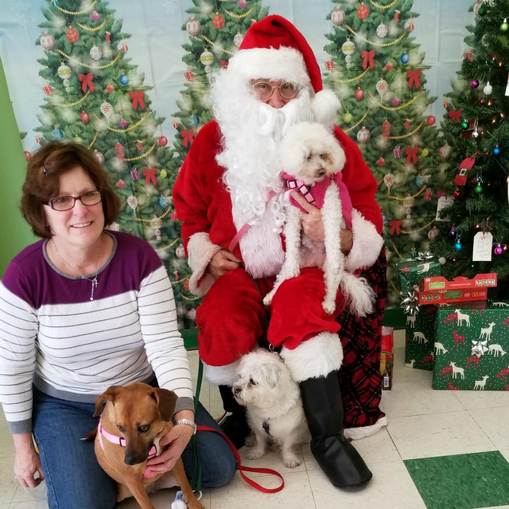 Santa & Dogs 4