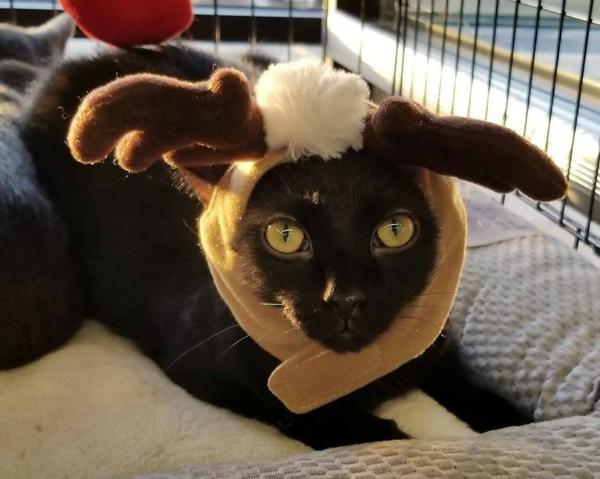 Santa & Cat 1