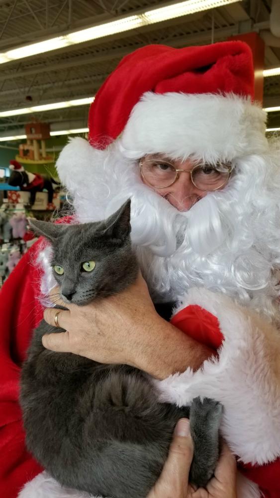 Santa Madden