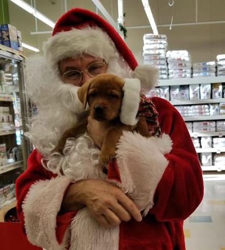 Santa & Dog 2