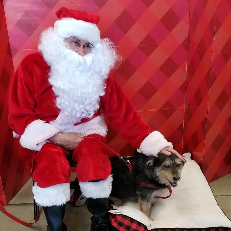 Santa & Dog 1