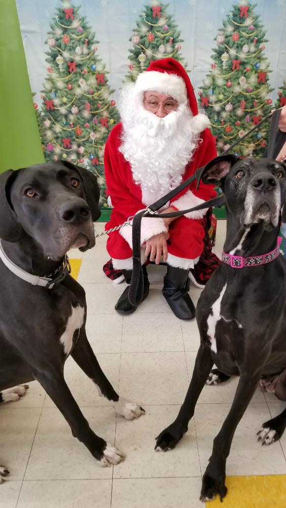 Santa & Dog 6